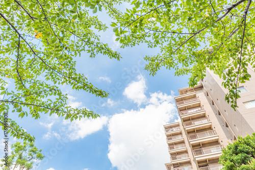 新緑とマンション