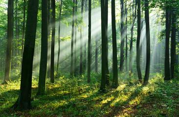 FototapetaForest landscape