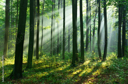 Photo sur Aluminium Forets Forest landscape
