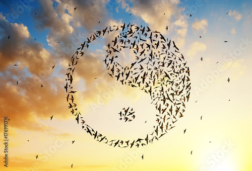 Vászonkép Silhouette of birds flying in Yin Yang formation at sunset sky.
