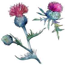 Wildflower Thistle Flower In A...