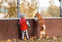 Little Boy And Red Shiba Inu P...