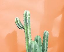 Cactus Fashion Set Design. Minimal Fashion Stillife. Trendy Creative Bright Colors. Green Cactus Mood On Orange Background