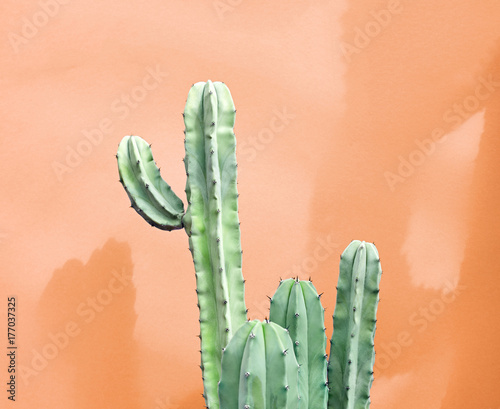 Cactus Fashion Set Design. Minimal fashion Stillife. Trendy Creative Bright Colors. Green Cactus Mood on Orange background