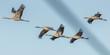 Leinwandbild Motiv vogelzug