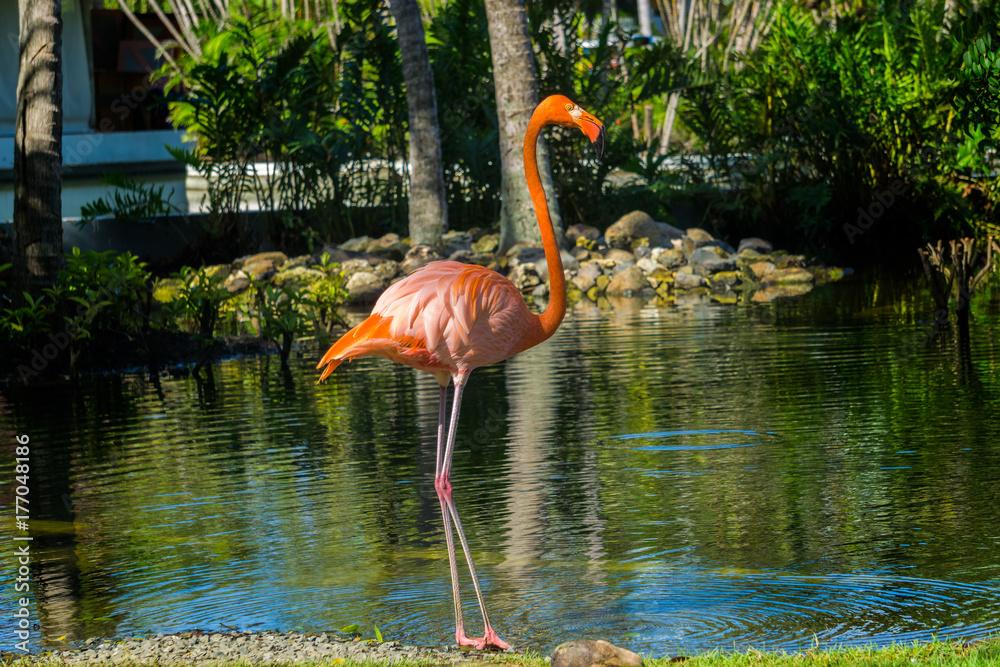 Flamingo-2 in der Dominikanischen Republik