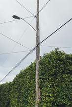 Tall Laurel Hedge Growing Arou...