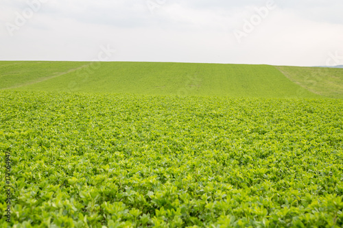 Poster Lime groen View field
