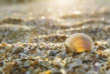 Shell Beach Saint Augustine, F...