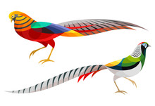 Stylized Pheasants - Golden Ph...