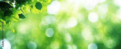 Foto auf AluDibond Lime grun Goldener Herbst