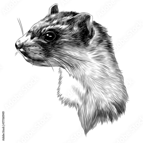 ferret sketch head vector graphics in black-and-white monochrome pattern Fototapet