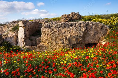 Plakat Krajobraz: Czerwone i żółte kwiaty wśród starożytnych ruin.