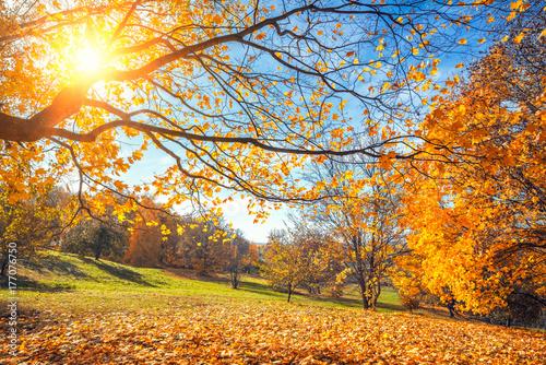 pogodny-jesien-krajobraz-z-zlotymi-drzewami