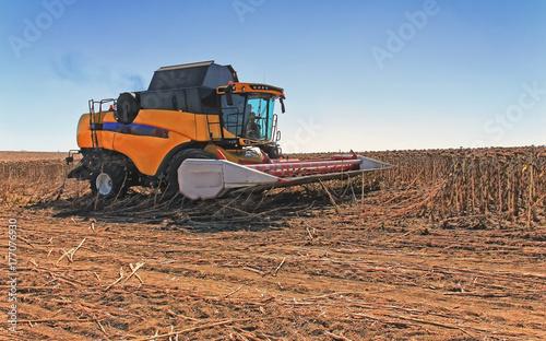 Zdjęcie XXL Kombajn zbożowy w akcji na polu pszenicy. Proces zbierania dojrzałych plonów