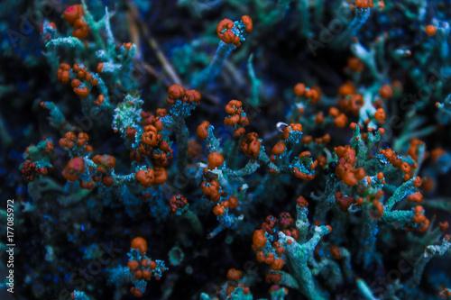 Zdjęcie XXL fluorescencyjny
