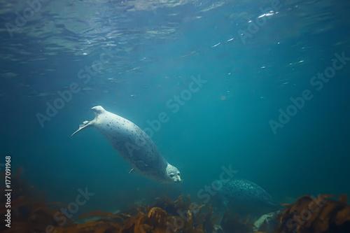 In de dag Dolfijn underwater landscape