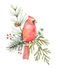 Watercolor Vector Christmas Bo...