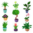 Houseplant set, plants and flowers vector illustrations