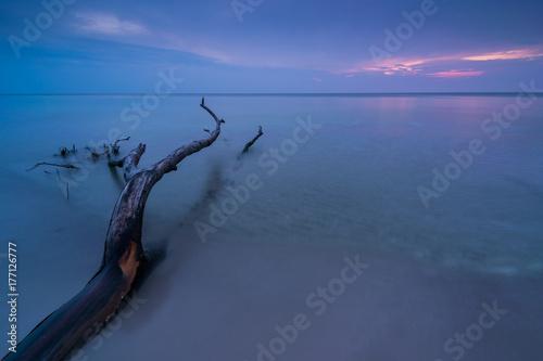 In de dag Zwart Baum im Wasser am Weststrand auf Fischland Darss Zingst