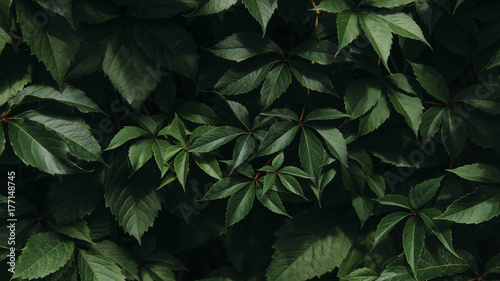 foliage Canvas