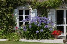 Bouquet Devant La Fenêtre.