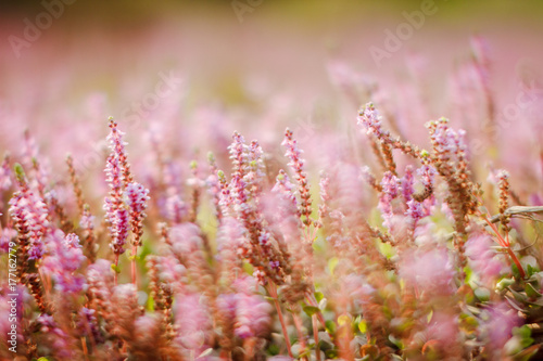 Pink Flowers Fields Background Buy This Stock Photo And Explore