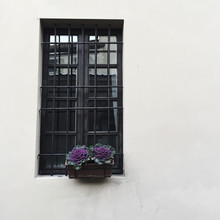 Purple Cabbages In Bloom Decorating A Window In Italian Street