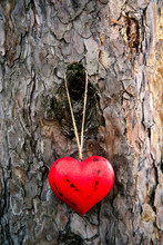 Close-up Of Red Wooden Heart Hanging On A Tree Trunk