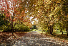 Path In Autumn In Moscow, Idaho.