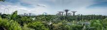Singapore Pano. Gardens And Ferris Wheel