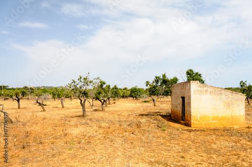 Plakat Typowy hiszpański gaj oliwny