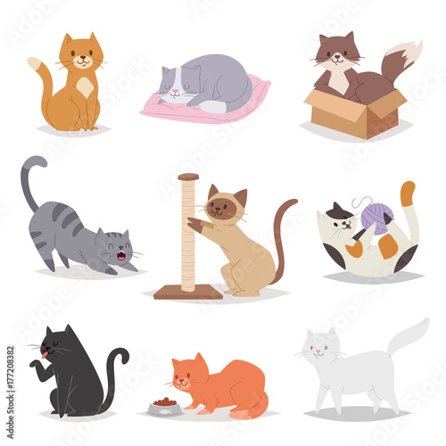Funny Cartoon Cats Characters Different Breeds Illustration Kitty