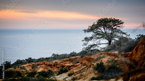 Photo Torrey pine tree against the setting sun in San Diego, California