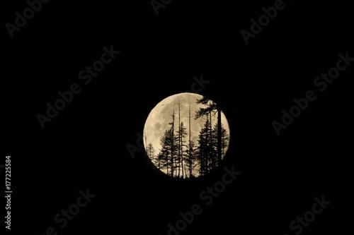 Fototapeta Montana Harvest Moon na północnym widelcu