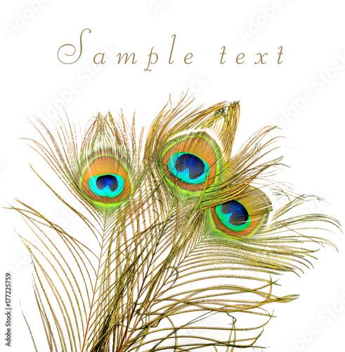 Fototapeta premium Peacock feathers on white background.