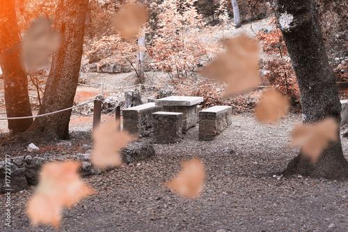 Papiers peints Cappuccino Autumn landscape and leaves