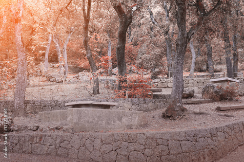 Papiers peints Cappuccino Autumn landscape in the forest