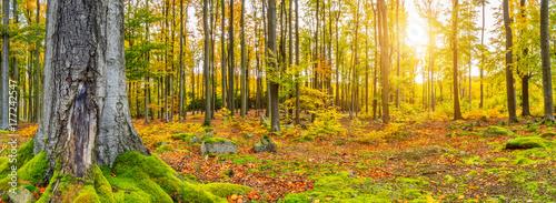 Photo Beautiful autumn colored beech trees landscape