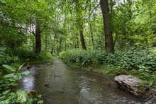 Small River At A Lush And Verd...