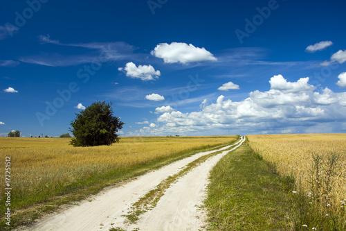 Fototapeta Droga przez pola