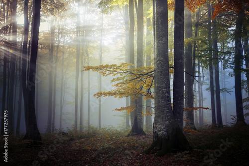 Cadres-photo bureau Foret brouillard Autumn landscape of a beautiful forest