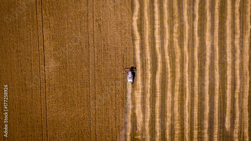 Harvesting corn in autumn Aerial top view. Harvester machine working in field . Combine harvester agriculture machine harvesting golden ripe wheat field. Agriculture. Aerial view. From above.