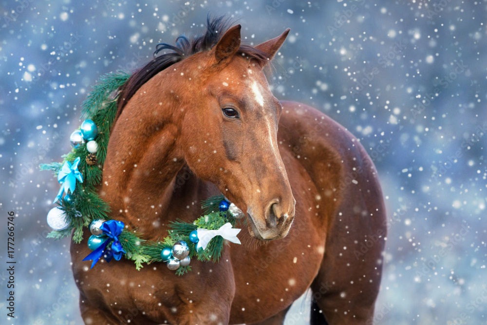 Red horse portrait in christmas decoration wreath