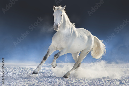 White horse run in snow field against dark background