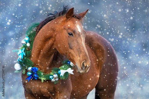 Fototapeta Red horse portrait in christmas decoration wreath obraz