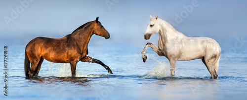 dwa-pieknego-konia-stoi-w-blekicie