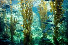 Large Aquarium With Fish And K...