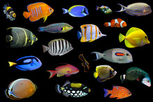 Set Of Tropical Saltwater Fish...
