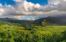 Taro Fields In Beautiful Hanalei Valley Kauai, Hawaii